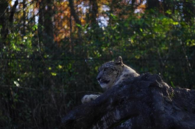 15多摩zoo13.jpg