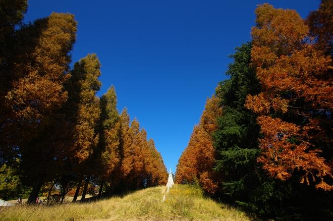昭和記念公園01.jpg