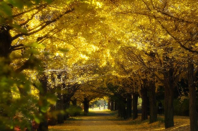 昭和記念公園05.jpg